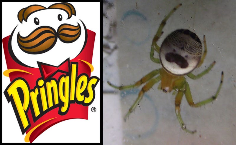 Illustration for article titled Was The Pringles Man Inspired By This Spider?