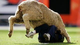City Of New York Cancels Mutton Bustin Rodeo S Greatest
