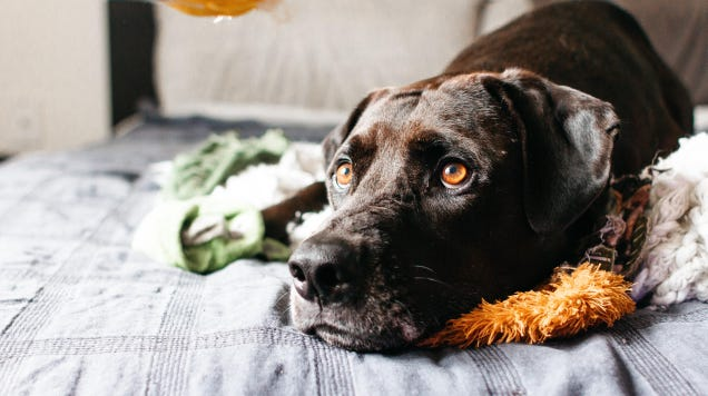 What to Do If Your Dog Suffers From Separation Anxiety