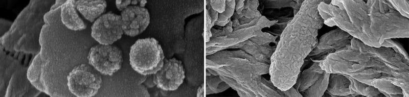 Illustration for article titled Las nanopartículas que convierten cualquier agua en potable