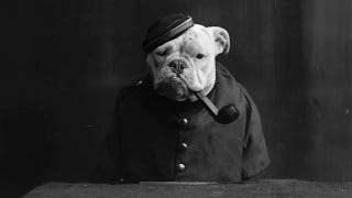 Illustration for article titled Vintage Photos Reveal Century-Long Obession with Dressing Up Pets