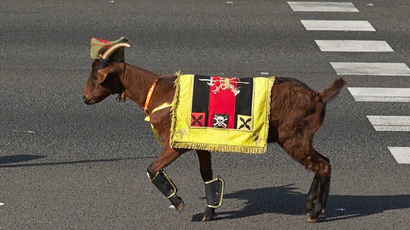 A very cosmopolitan goat.