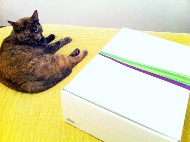 Illustration for article titled We Have Kinect, Home Testing Begins