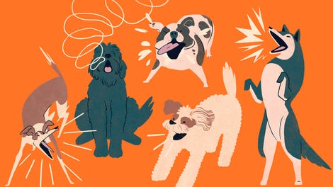 how to make your dog stop barking at fireworks