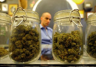 Jars full of medical marijuana in a Los Angeles dispensary.  (Getty Images)