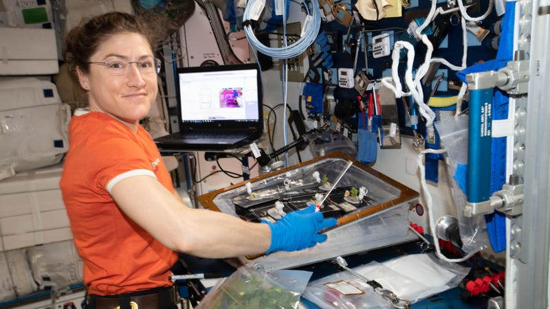 Christina Koch on the ISS.