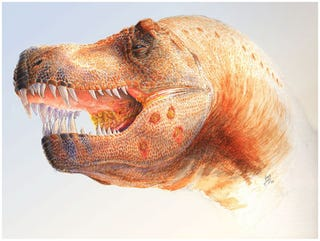 Illustration for article titled The Mighty T-Rex Died from a Common Bird Parasite