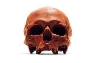 Illustration for article titled Let's All Eat Some Skulls