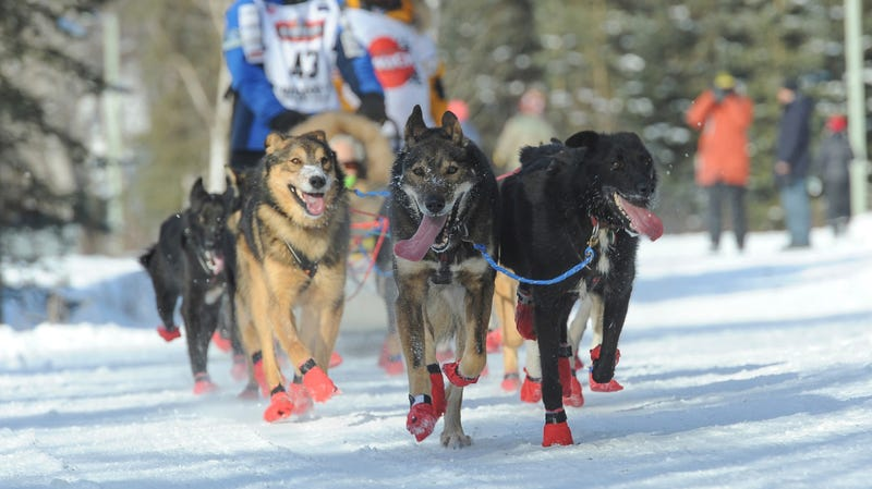 Musher Mishi Konno runs along the trail at the start of the Iditarod on March 2, 2019.