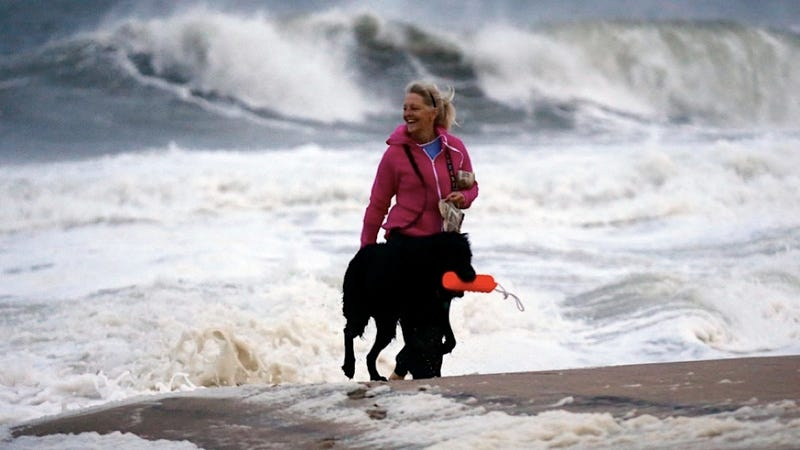 Illustration for article titled Fearless Dog Conquers Frankenstorm, Is Rewarded with Floaty Toy