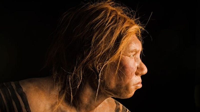 Q Significa Neanderthal How did Neanderthal ge...
