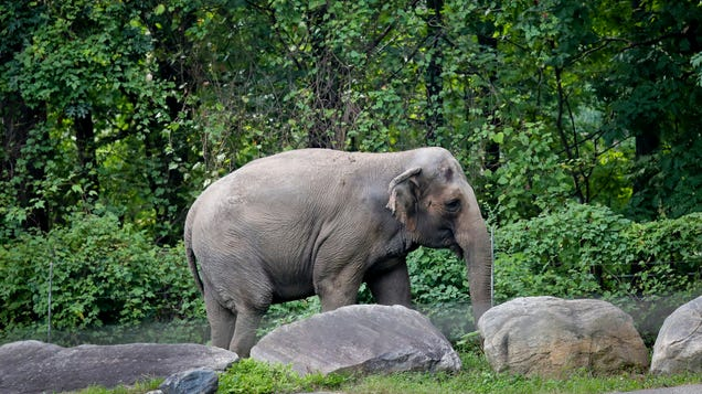 Animal Welfare Lawyers Say New York's 'Loneliest Elephant' Is a Person