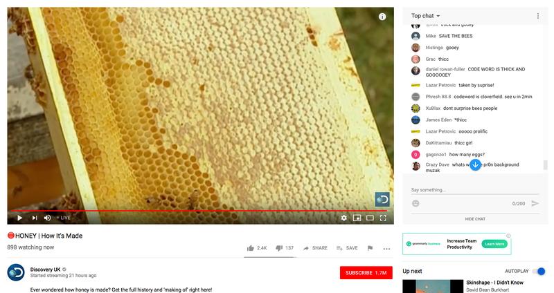 Illustration for article titled Discovery lleva horas emitiendo los mismos 30 segundos de un documental sobre miel con cientos de espectadores
