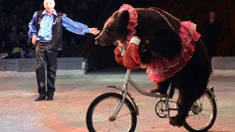 Illustration for article titled Animal Rights FTW: This Amazing Russian Organization Provides Orphaned Bears With Free Tricycles And Boxing Gloves