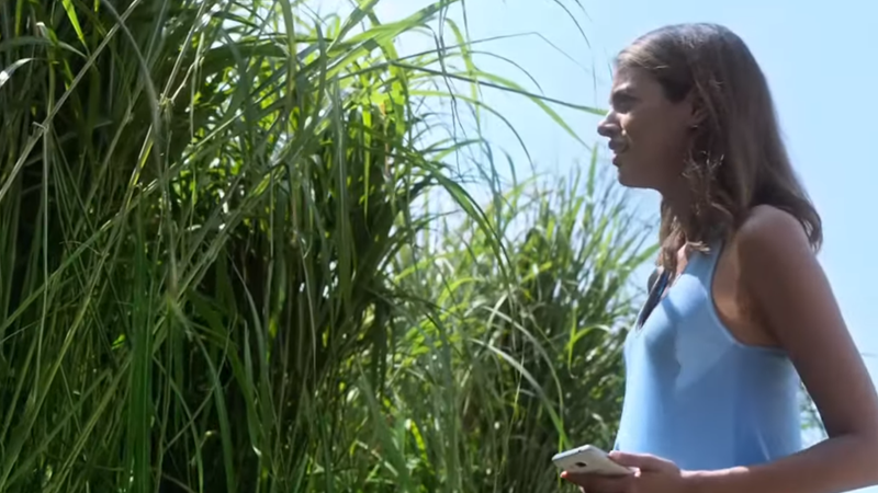 The First Trailer for Netflix's In the Tall Grass Makes Even Grass Itself Petrifying