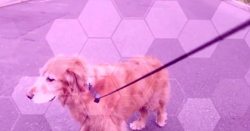 Illustration for article titled La peor idea con drones que puede existir: pasear perros