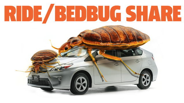 Dallas Exterminator Treats  5 to 10  Ride Share Cars A Week For Bed Bug Infestations