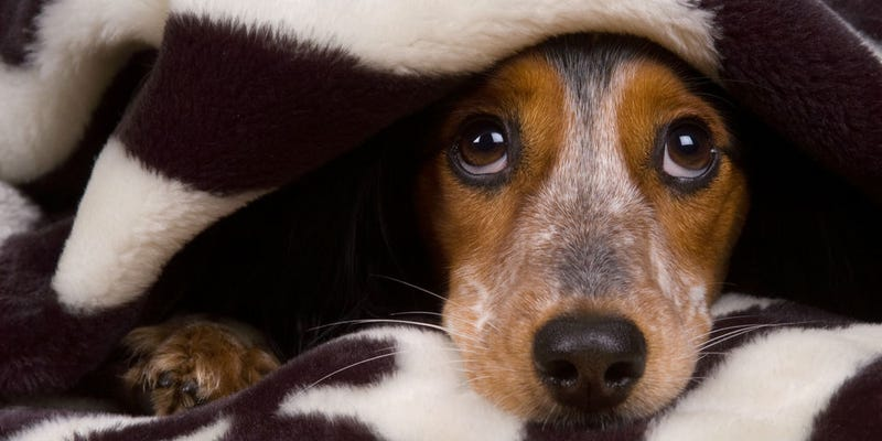Illustration for article titled How to Keep Your Dog Safe and Warm This Winter