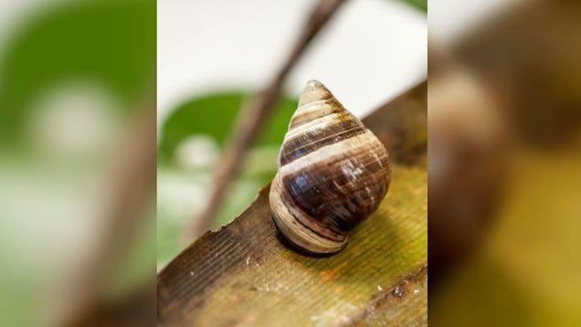 Goodbye George, the Last Known Hawaiian Land Snail of Its Species