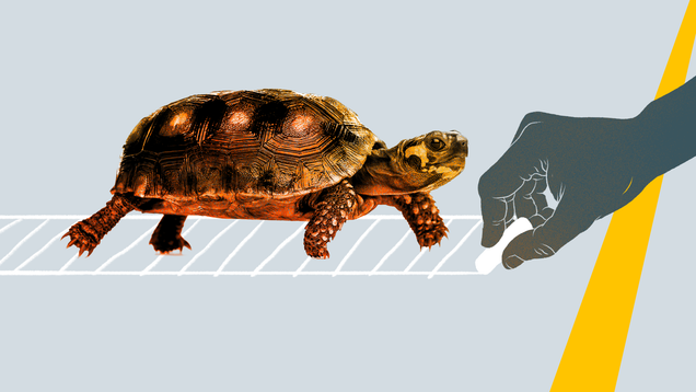 How to Help a Turtle Across a Road