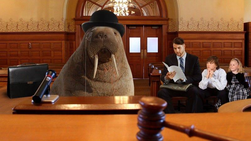 A responsible walrus.