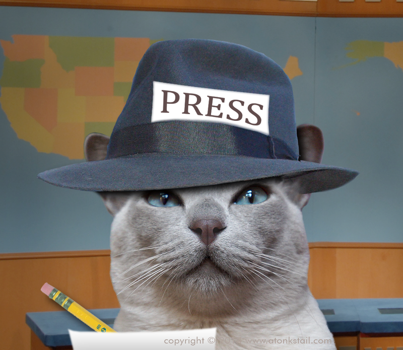 Illustration for article titled Cats Kinja Continuing Mish of INTEGRTIES Journalismwise