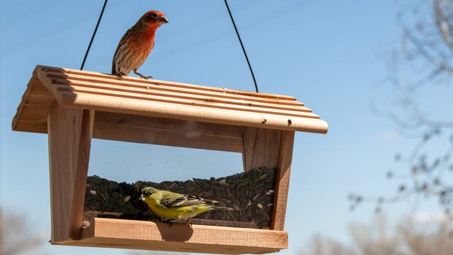 Get a Bird Feeder, and Don t Overthink It