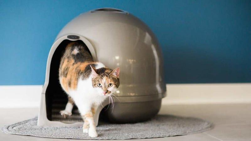 Petmate Booda Dome Clean Step Cat Litter Box | $15 | Amazon