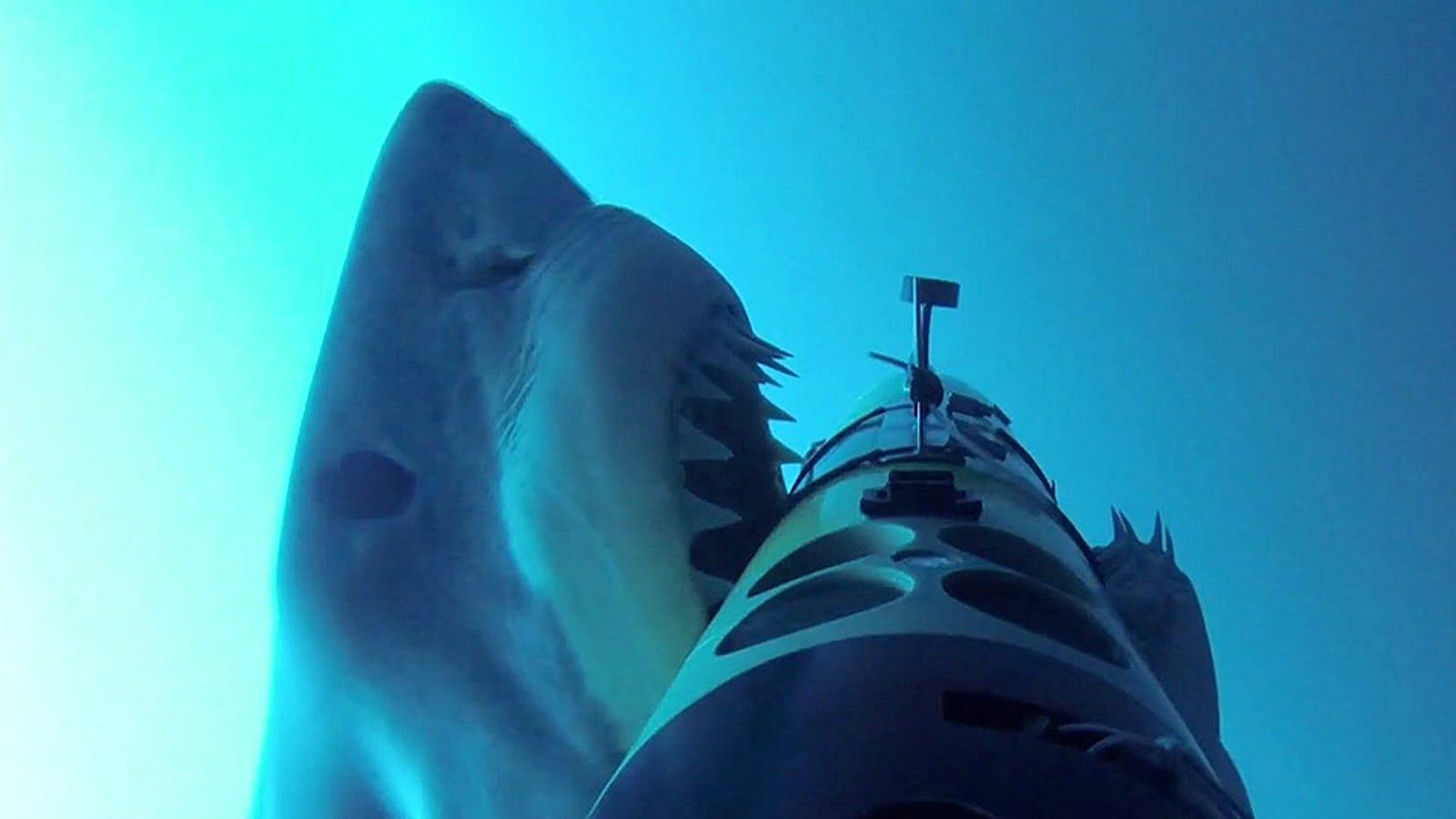 Esto es lo (último) que verías si te ataca un gran tiburón blanco