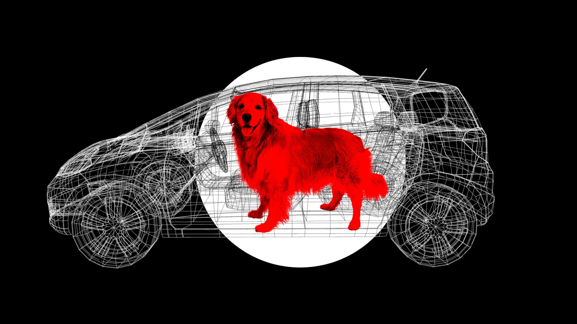 mimze9jkogqdu28h15kl you aren't doing enough to keep your pet safe in the car