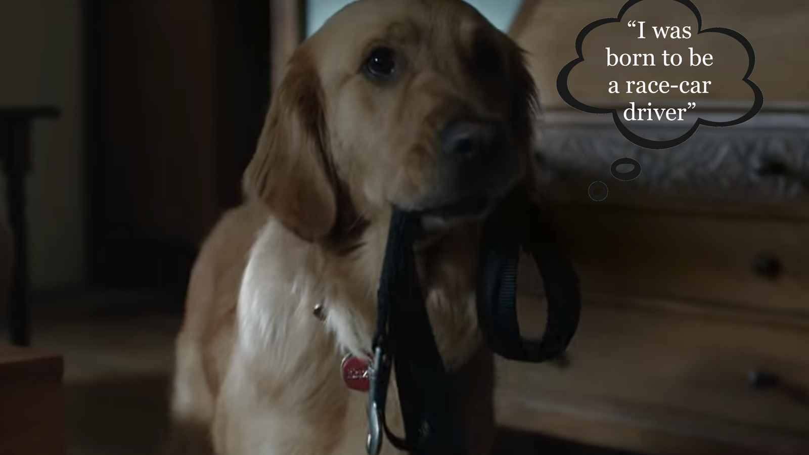 Dogs With Inner Monologues, Ranked