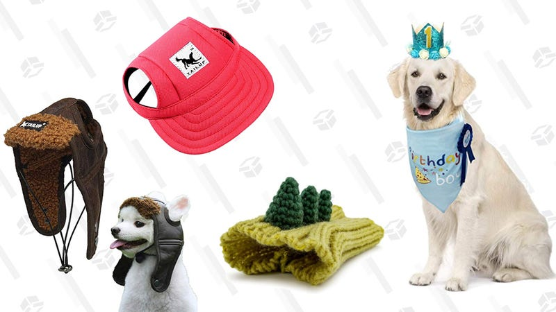 Should I Buy My Dog One Of These Hats?