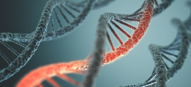 Illustration for article titled Científicos crean por primera vez un nuevo tipo de ADN artificial
