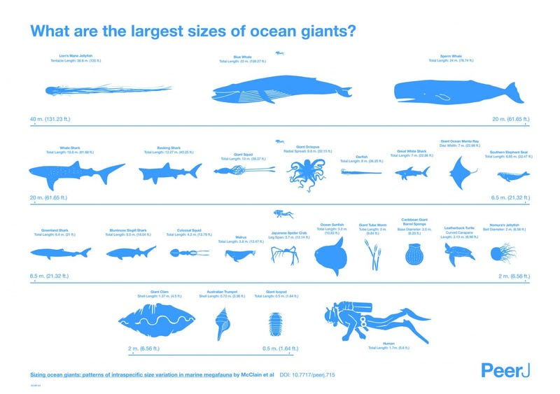 Illustration for article titled This Is How Big The Ocean's Most Gigantic Creatures Can Really Get