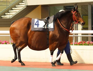 Illustration for article titled Racehorse Shows Up For Season 450 Pounds Overweight