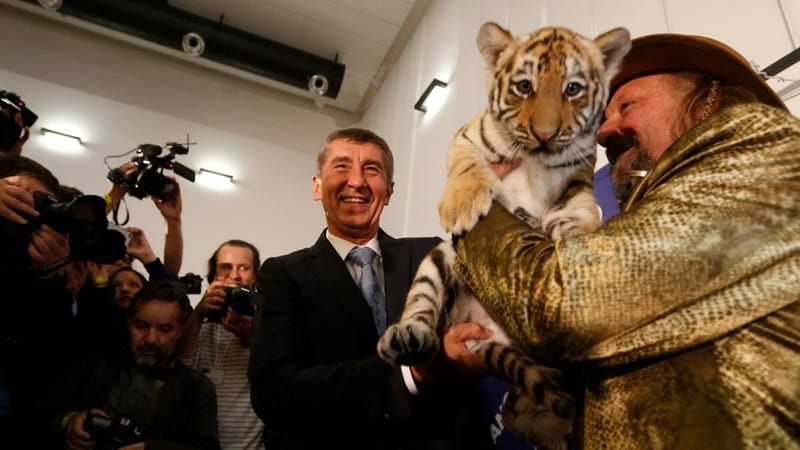 Illustration for article titled Tiger Cub Photo Op Is the Best Election Strategy Ever