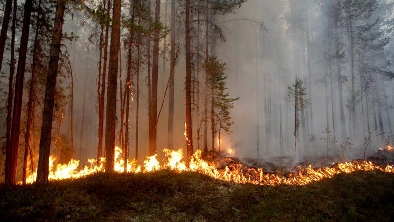 A fire burns outside Ljusdal, Sweden on July 15.