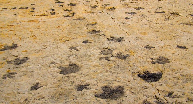Huellas de dinosaurios en Dinosaur Ridge Colorado