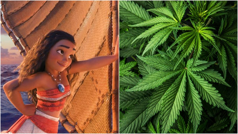 """Illustration for article titled Cake decorator mistakes """"Moana"""" for """"marijuana,"""" gets fired"""