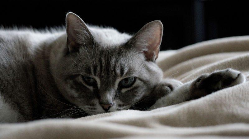 Illustration for article titled Una sustancia doméstica muy común puede causar problemas de tiroides en los gatos