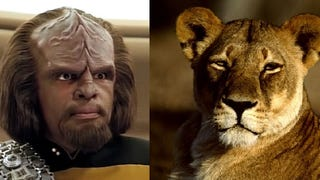 Lions are becoming the Worf of the animal kingdom