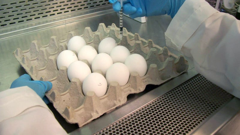 Egg-based flu vaccines might offer less protection against this year's major flu strain, FDA chief Scott Gottlieb admitted during a House hearing Thursday, but they're unlikely to go out of style just yet.