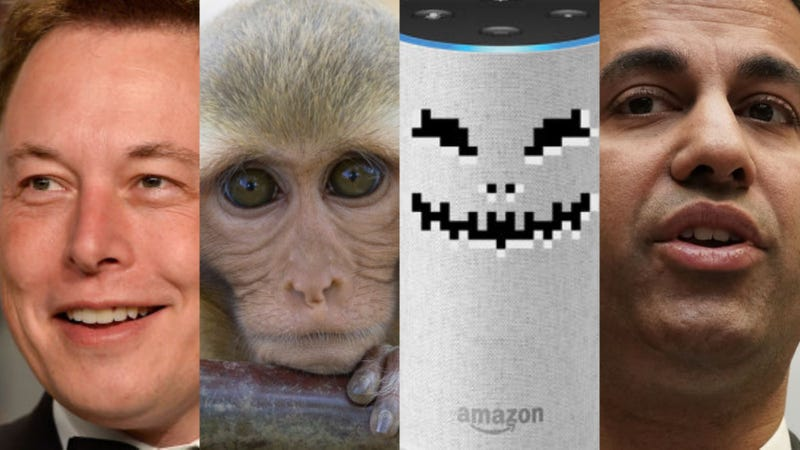 Illustration for article titled Elon Musk's Monkey Tests, Dating Site Hell, and Alexa Nightmares: The Best Gizmodo Stories of the Week