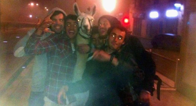 Illustration for article titled Drunk Kids Steal Llama, Party With Llama