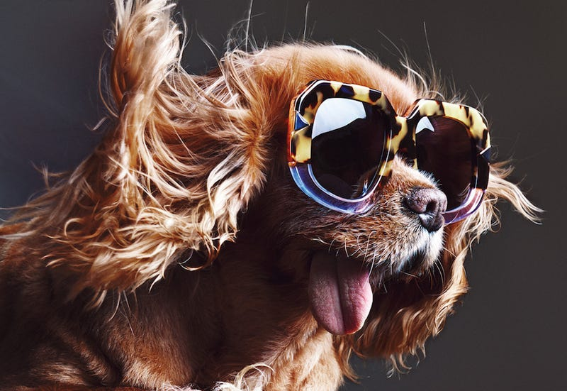 Illustration for article titled Karen Walker's Latest Campaign Stars An Adorable Dog Named Toast