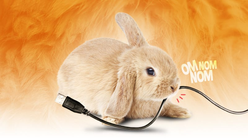 Illustration for article titled How Can I Protect My Gadgets from Pets?