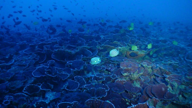 A mesophytic reef filled abuzz with fish.