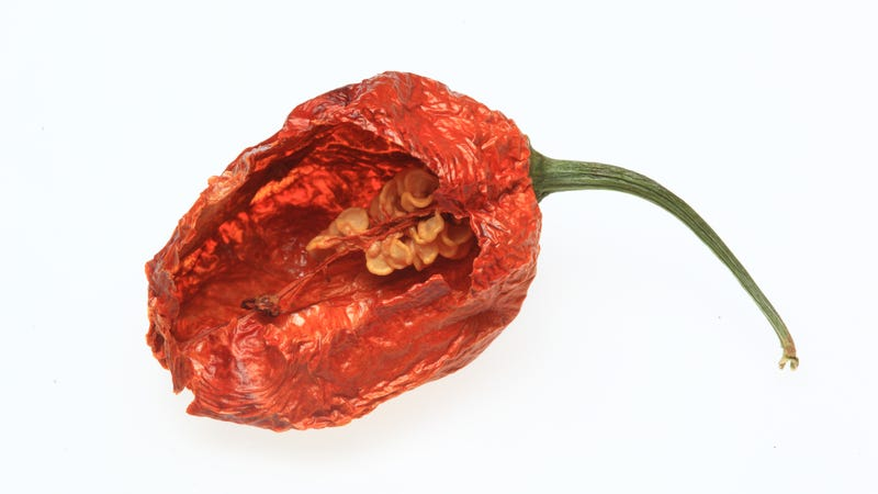 Illustration for article titled Expert: That's not the way you're supposed to eat a ghost pepper, guy