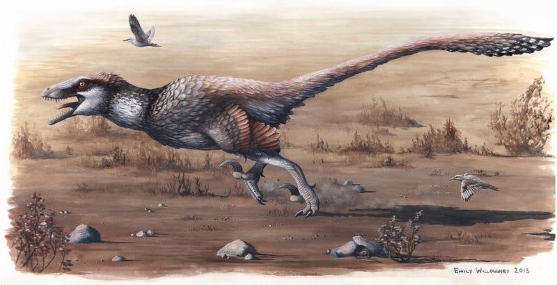 Illustration for article titled Descubren un velociraptor gigante, el primero de este tamaño con plumas en los brazos