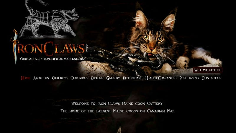 Illustration for article titled Iron Claws Maine Coon Cattery